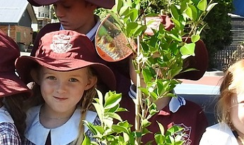 Narrabeen Lakes Public School tree planting day